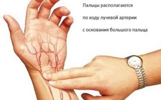 Частота пульса в норме у взрослых
