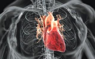 Где и как болит сердце