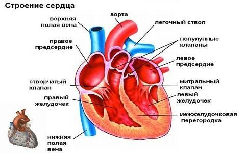 пороки сердца классификация
