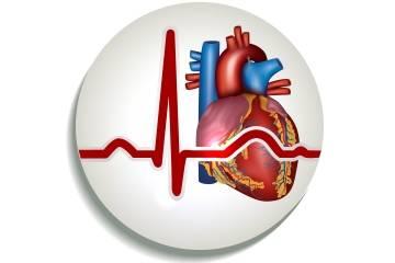 О ритме сердца на результатах кардиограммы