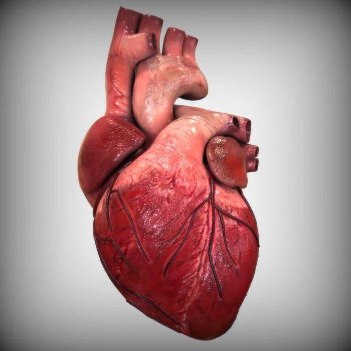 пролапс сердечного клапана