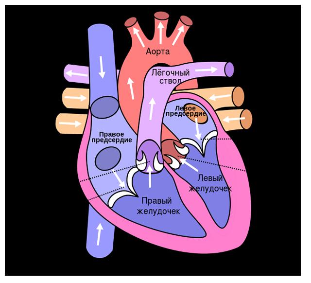 от чего случается инфаркт миокарда