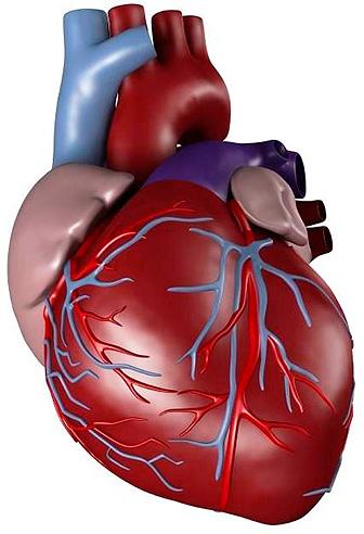 Препараты для поддержки сердца для пожилых