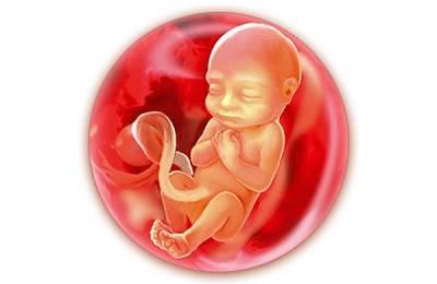 Малыш внутри