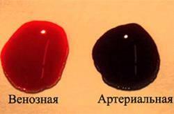 Отличия венозной и артериальной крови