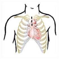 шунтирование сосудов сердца