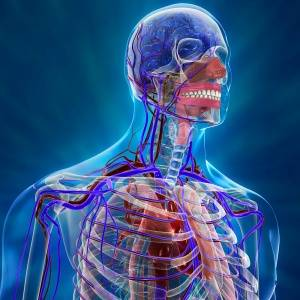 Стенозирующий атеросклероз внечерепных отделов брахиоцефальных артерий