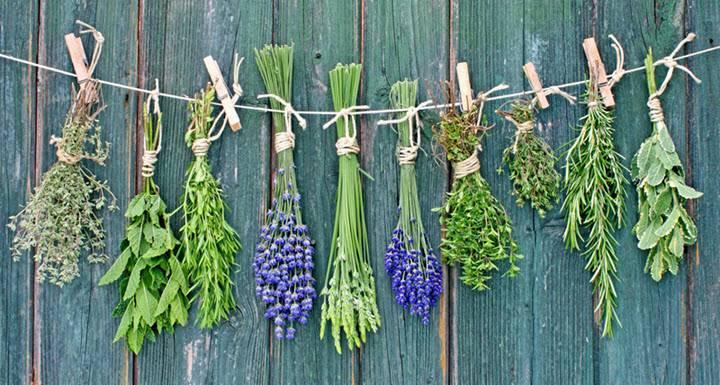 Травы при стенокардии