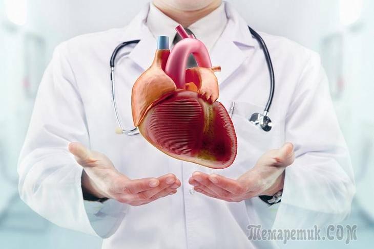 Клапан сердца не закрывается — Сердце