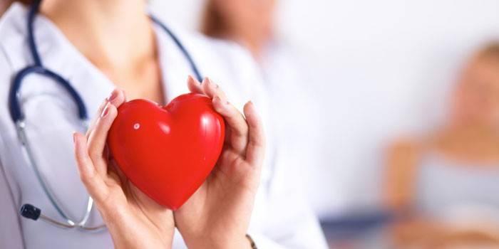Пластмассовое сердце в руках у врача