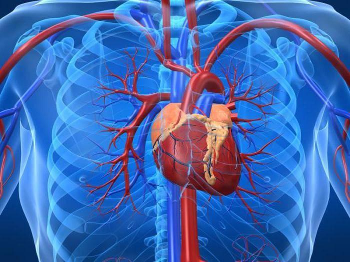профилактика инфаркта миокарда инсульта