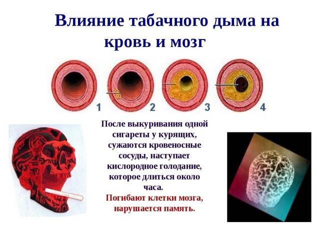 Влияние табачного дыма на мозг