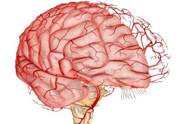 При головной боли сосуды расширяются или сужаются — Сердце