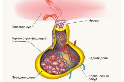 Заболевания гипофиза - причина высокого диастолического давления