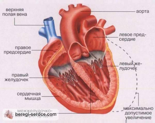 сердечная недостаточность 1 степени