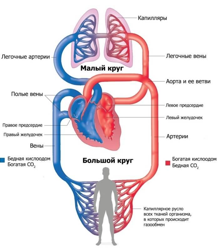 при каком сердечном заболевании появляется кашель